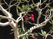 http://bungaloweight.sellmojo.com/images/inspiration/flower on tree24753.jpg